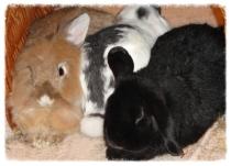 Kaninchen kuscheln
