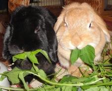 Paulchen und Minnie